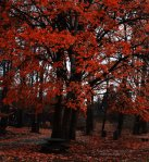 Dreaded_Red_Tree_by_evile_წითელი ხე 33